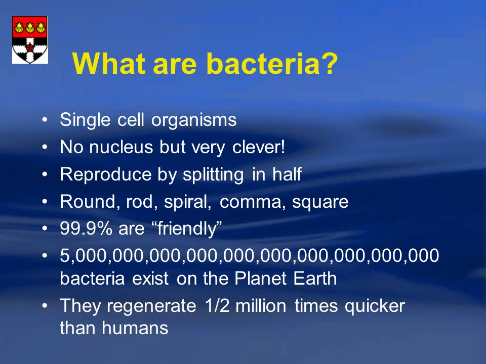 What are bacteria Single cell organisms No nucleus but very clever!