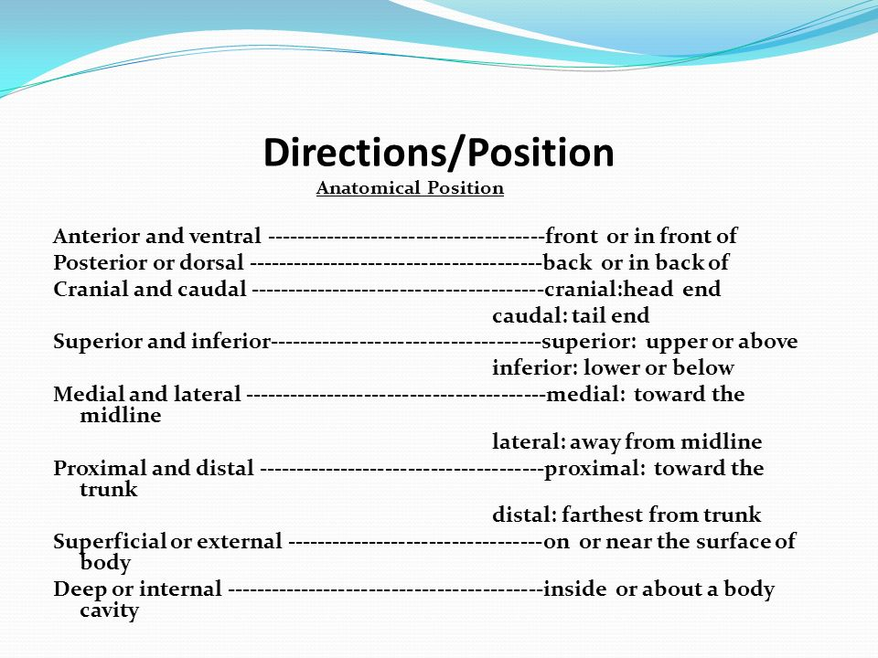 Directions/Position Anatomical Position. Anterior and ventral front or in front of.