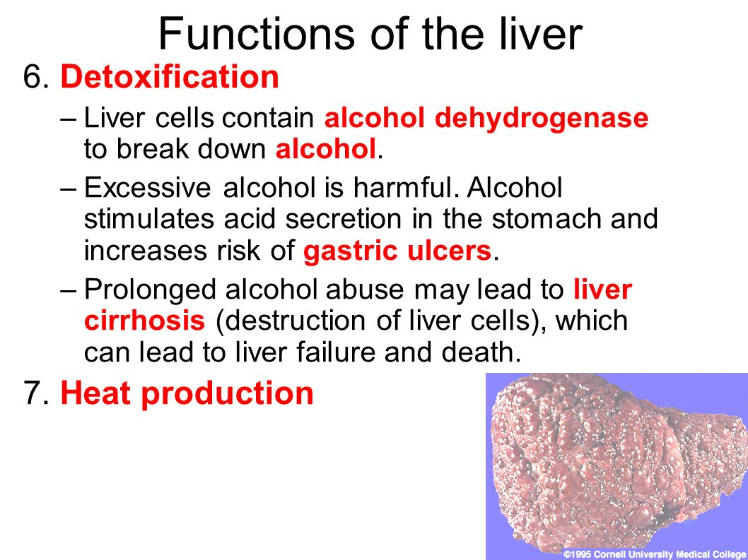 function of liver Chapter 36 liver function a background: read over gross, microscopic & ultrastructure of the liver and be familiar with terminology b biochemical functions of the liver.