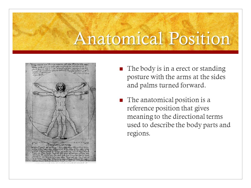 Anatomy & Physiology Introduction. - ppt download
