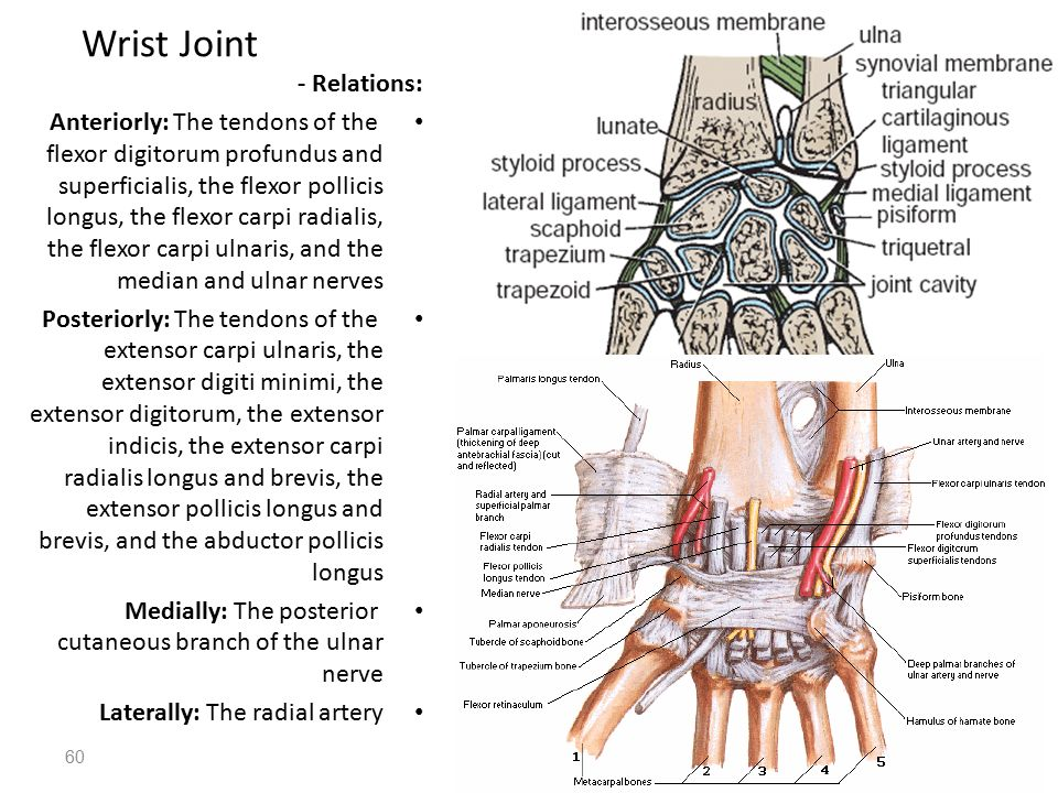 Structures On The Posterior Aspect Of The Wrist Ppt Download