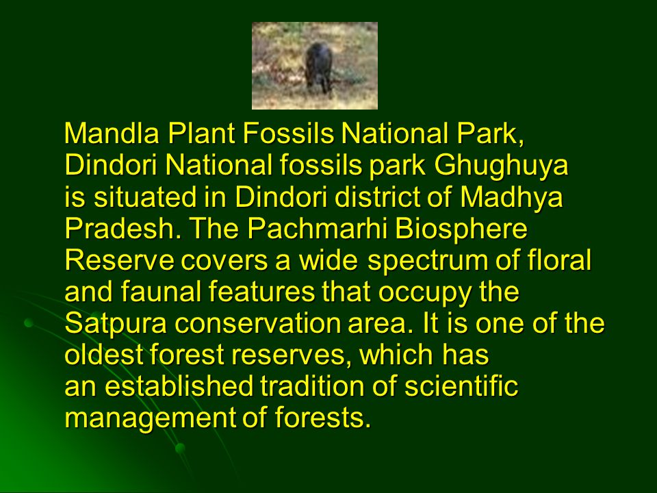 Mandla Plant Fossils National Park, Dindori National fossils park Ghughuya is situated in Dindori district of Madhya Pradesh.