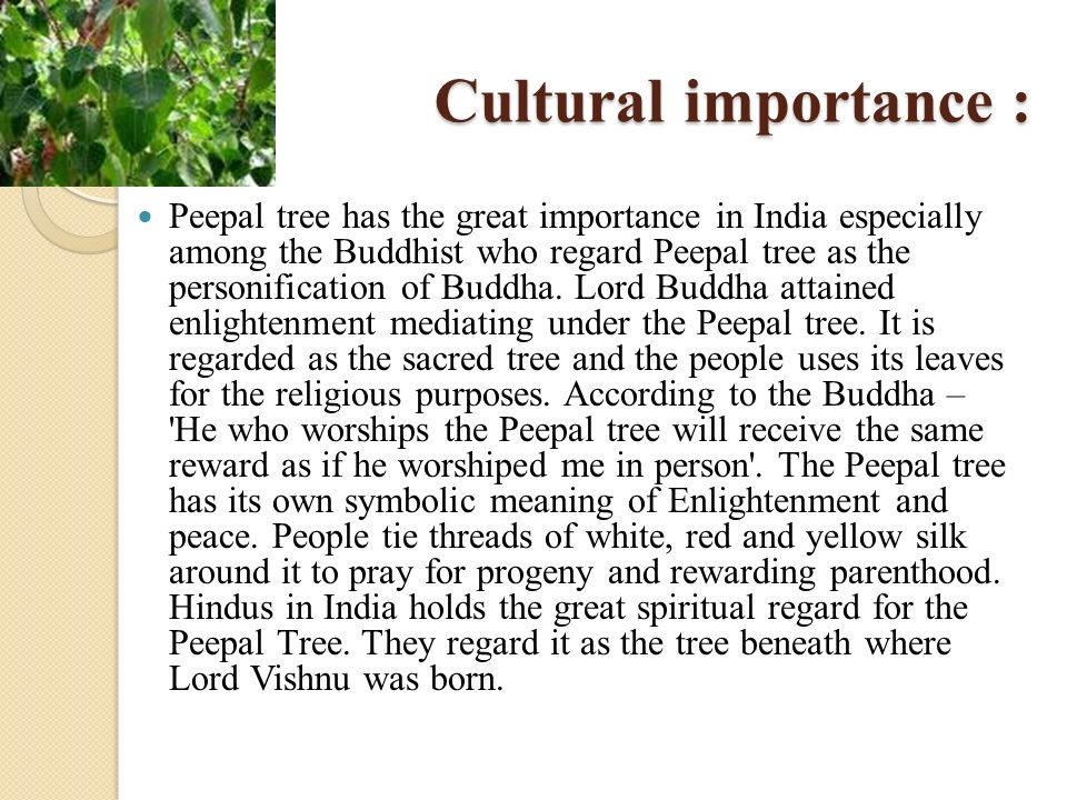 Cultural importance :