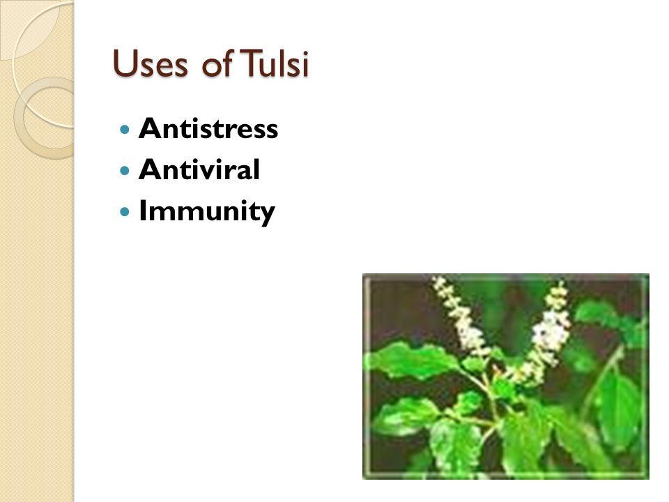 Uses of Tulsi Antistress Antiviral Immunity
