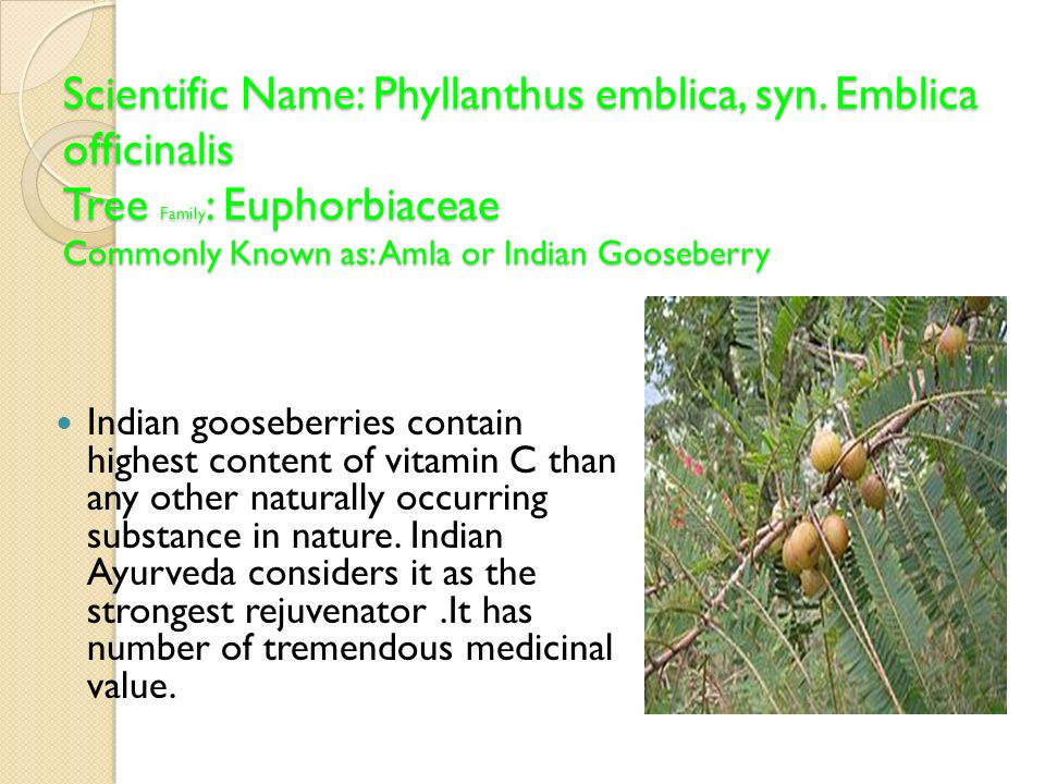 Scientific Name: Phyllanthus emblica, syn