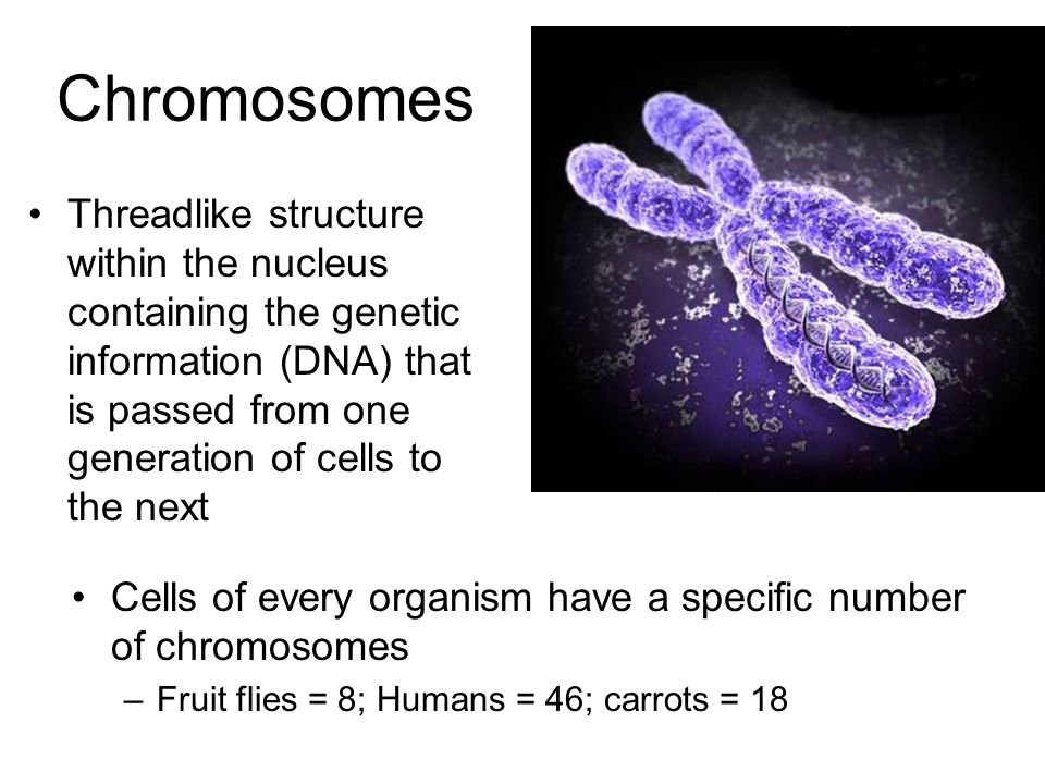 Cell Growth and Divisi...