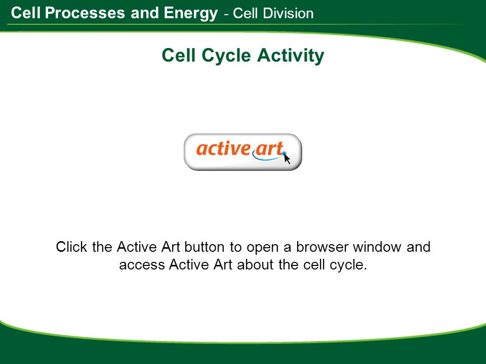 Do Now Take the worksheet from the front of the room ppt download – Cell Processes Worksheet
