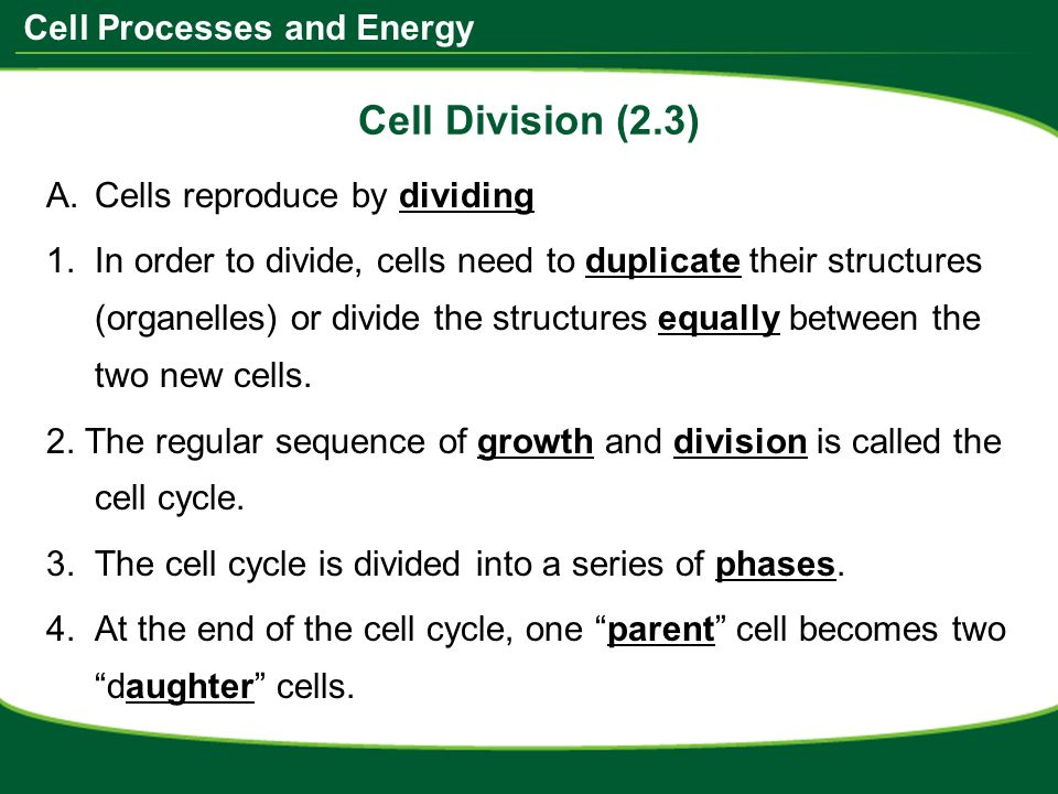 Do Now Take the worksheet from the front of the room ppt video – Cell Division Worksheet