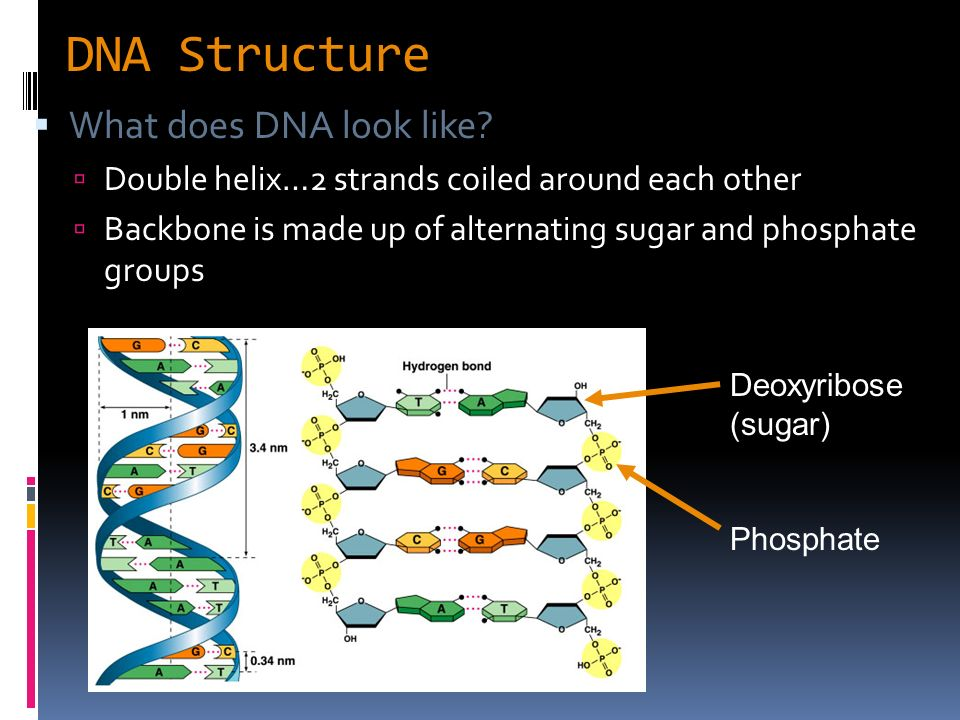 What does it mean when a DNA strand is complementary ...