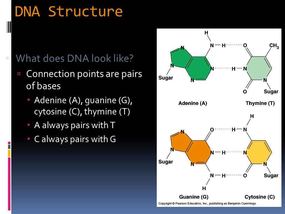 What DNA actually looks like - Scientific American Blog ...