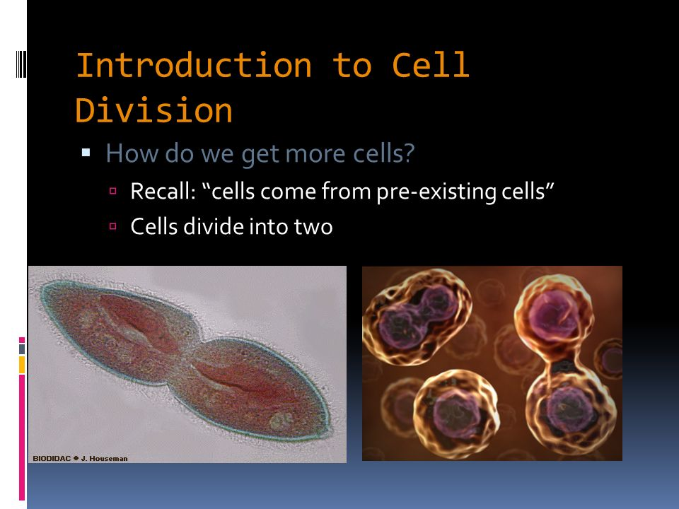 Introduction to cell signaling