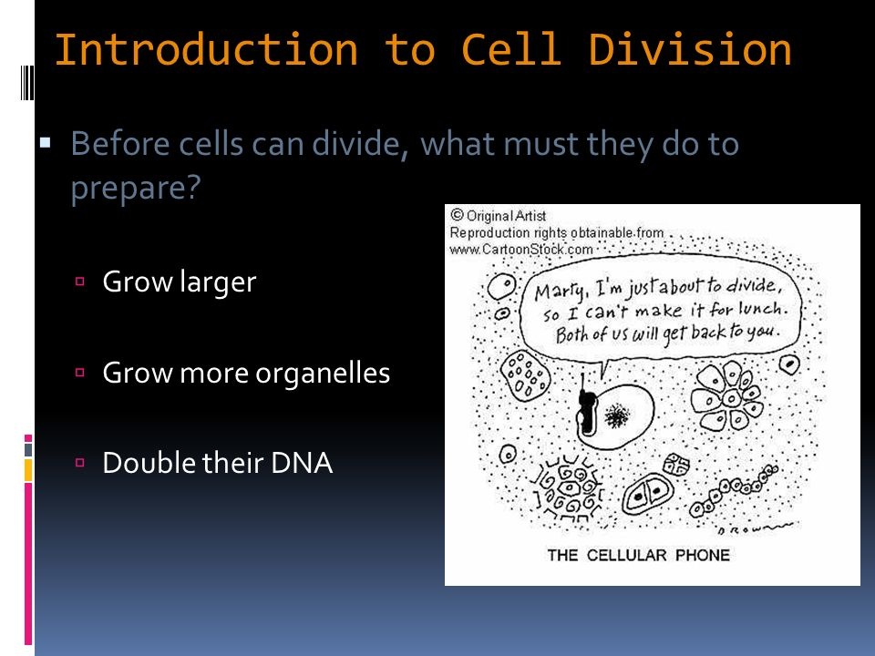an introduction to cell division Here is a slide that i made and often use at the beginning of my talks to briefly  explain what mitosis is the images are taken from a live cell that.