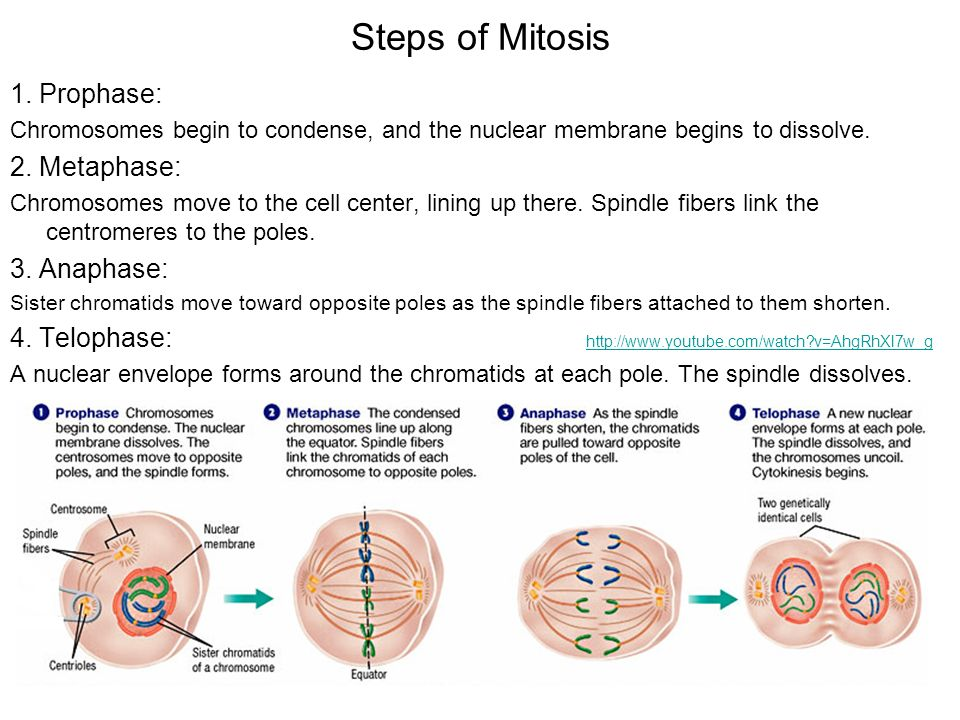 cell growth amp division chapter ppt video online download