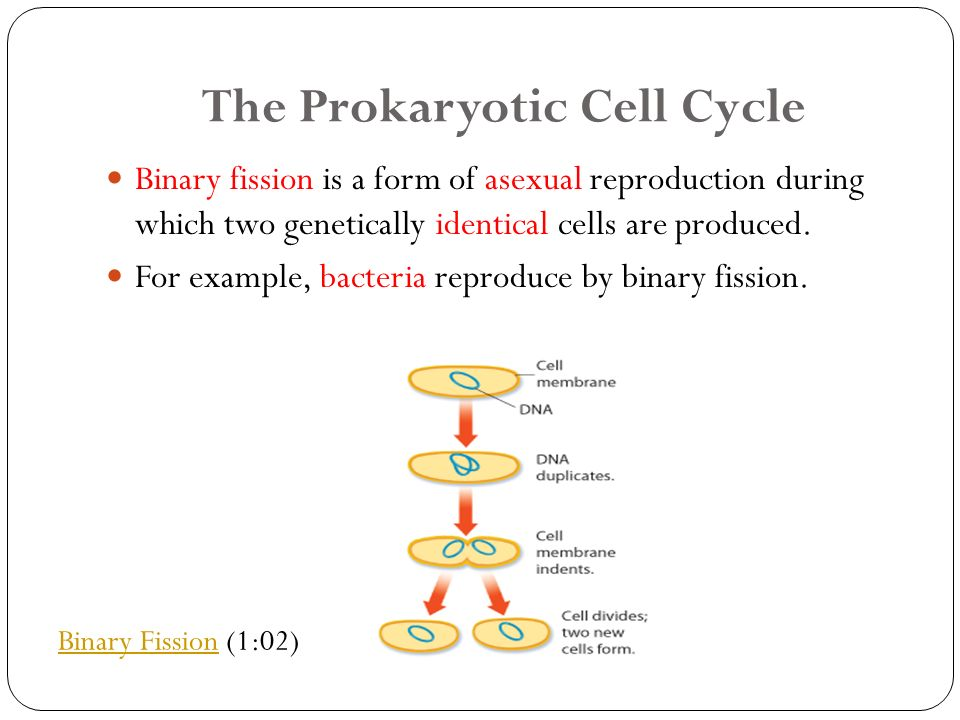 Chapter 10: Cell Growth and Division Section 11.4: Meiosis - ppt ...