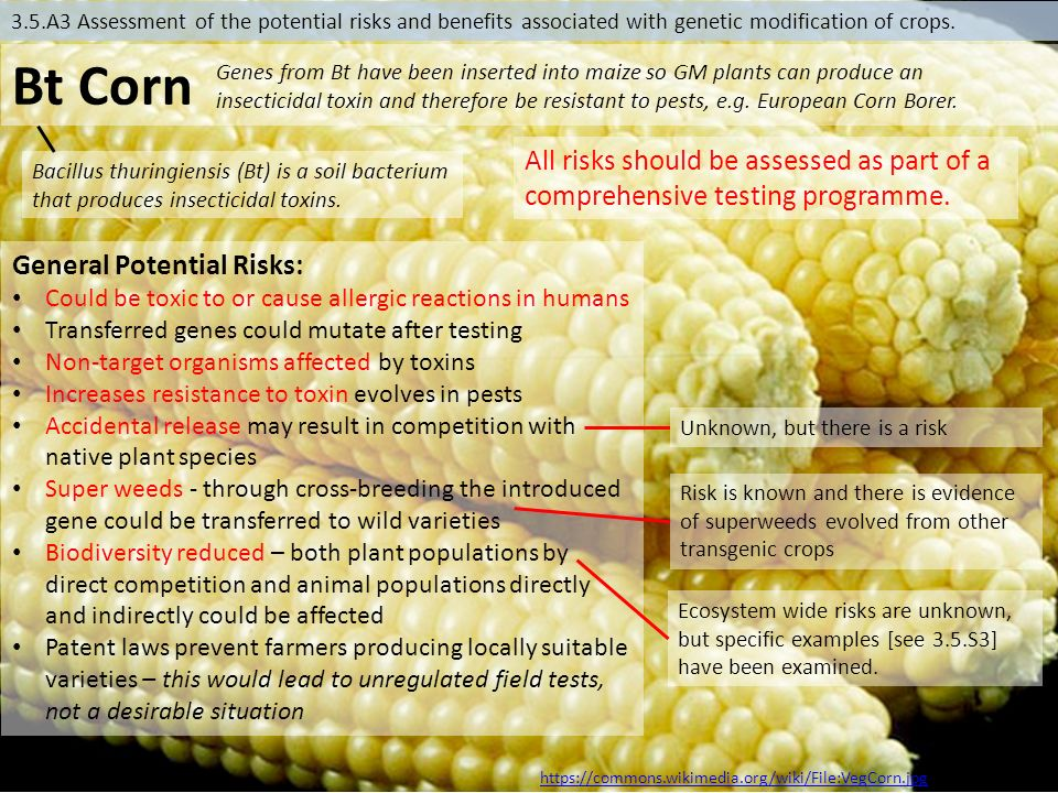 corn species that humans have caused to evolve Two independent studies demonstrate that the human brain required cooking and meat-eating in order to evolve  species yet human have  humans — have.