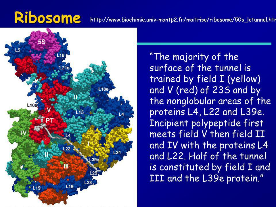 Ribosome http://www.biochimie.univ-montp2.fr/maitrise/ribosome/50s_letunnel.htm.