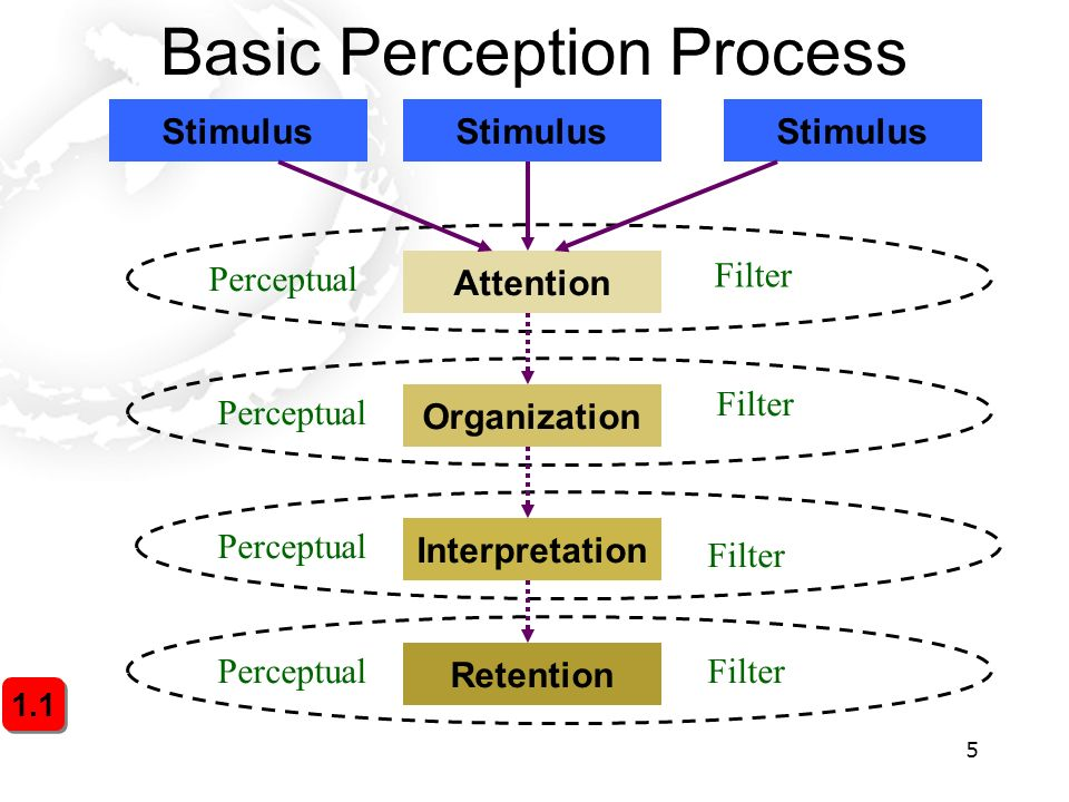 perception process