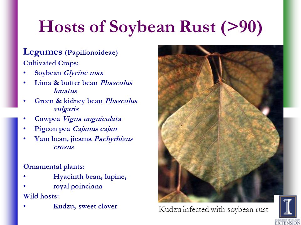 Hosts of Soybean Rust (>90)