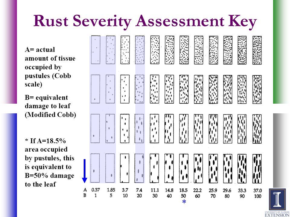 Rust Severity Assessment Key