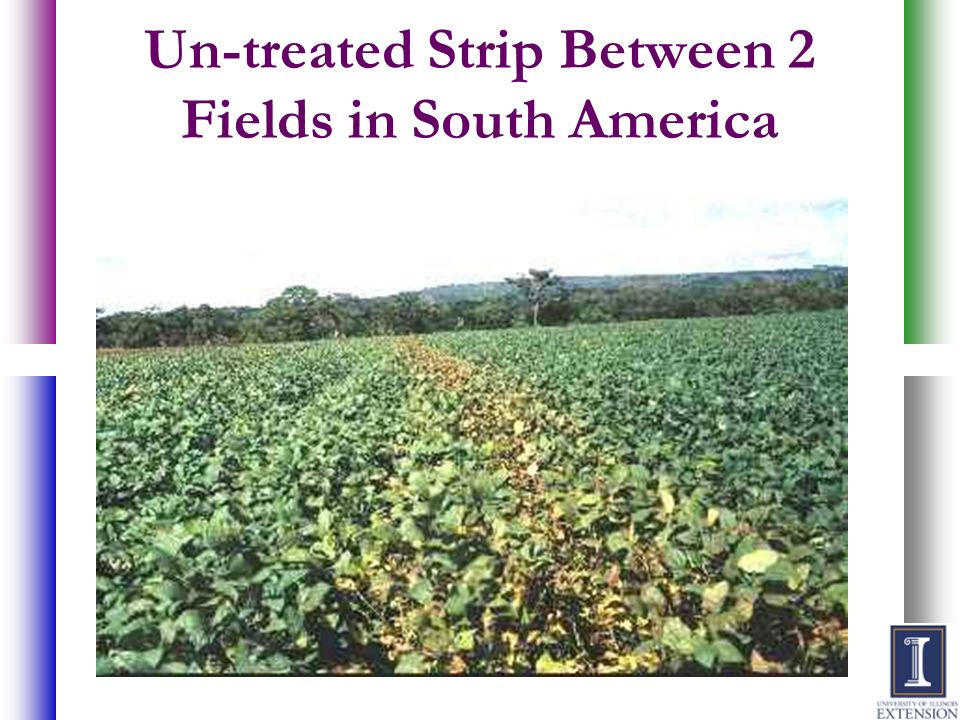 Un-treated Strip Between 2 Fields in South America