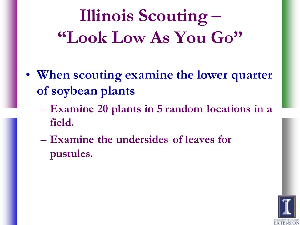 Illinois Scouting – Look Low As You Go
