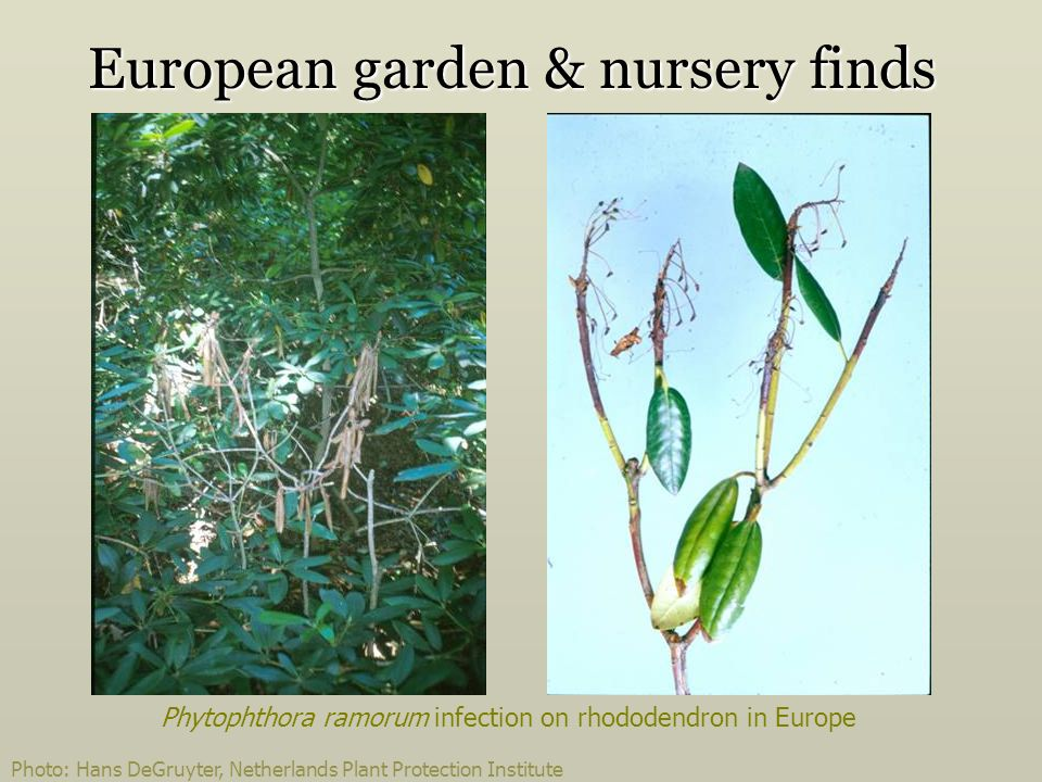 European garden & nursery finds