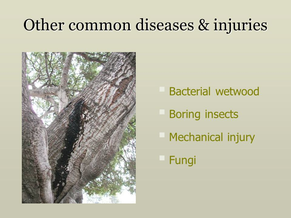 Other common diseases & injuries