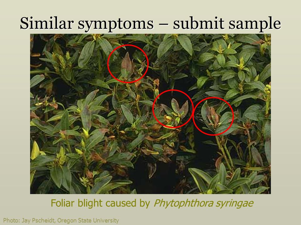 Similar symptoms – submit sample