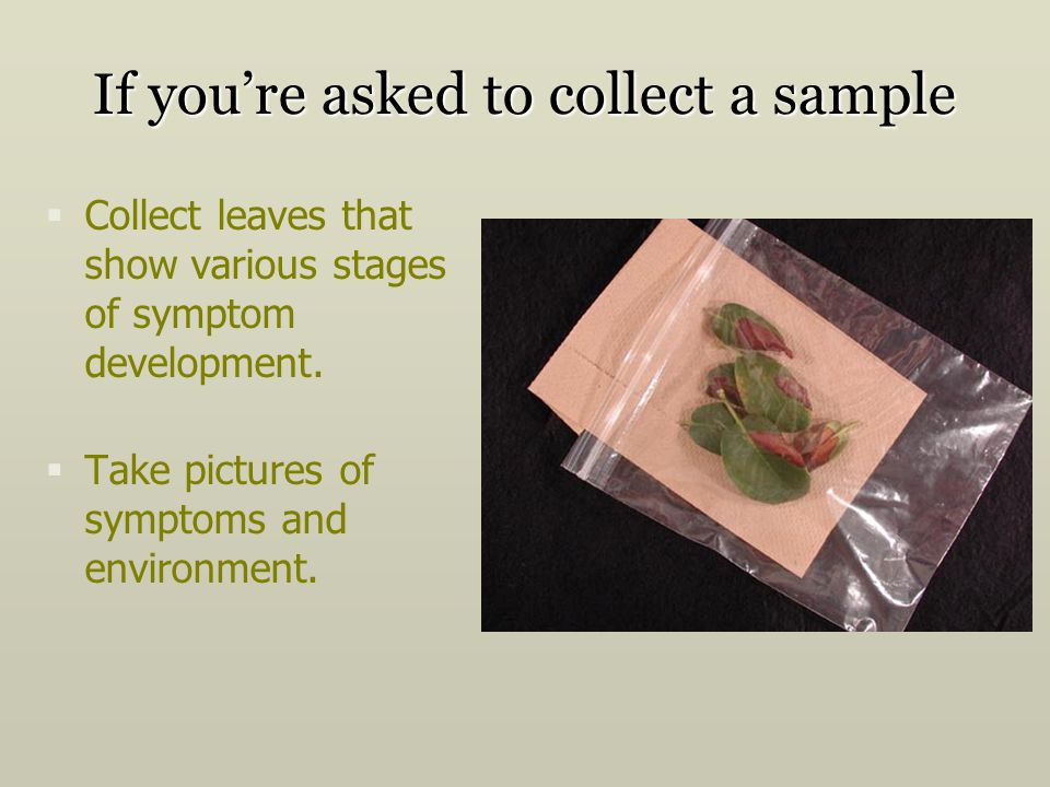 If you're asked to collect a sample