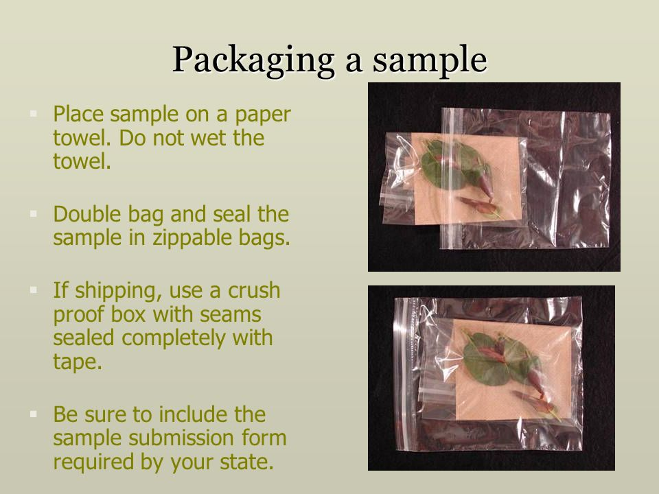 Packaging a sample Place sample on a paper towel. Do not wet the towel. Double bag and seal the sample in zippable bags.
