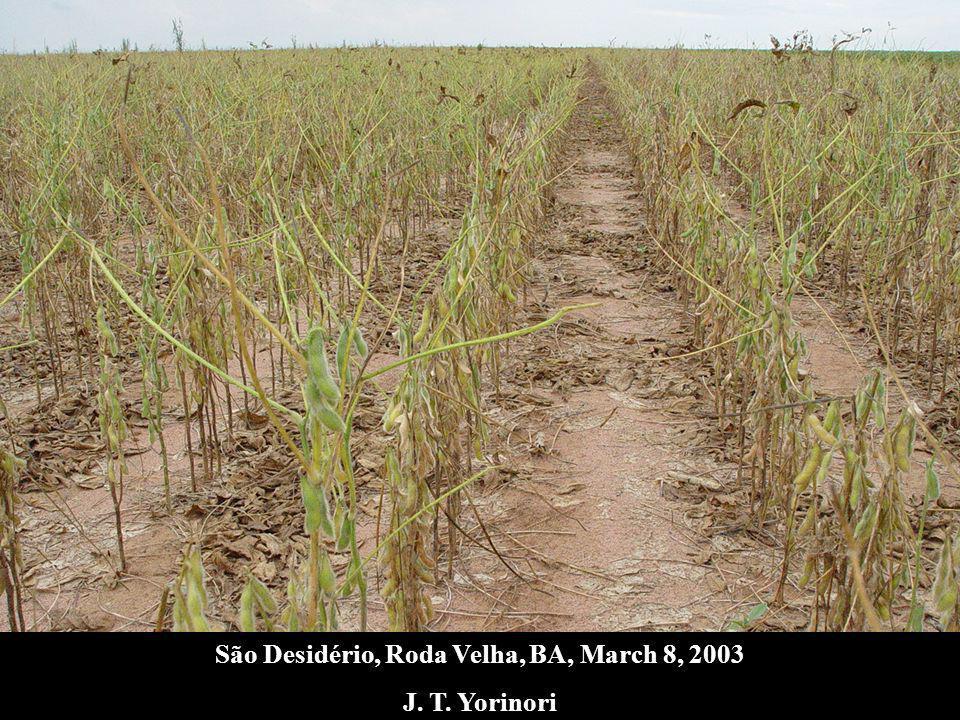 São Desidério, Roda Velha, BA, March 8, 2003
