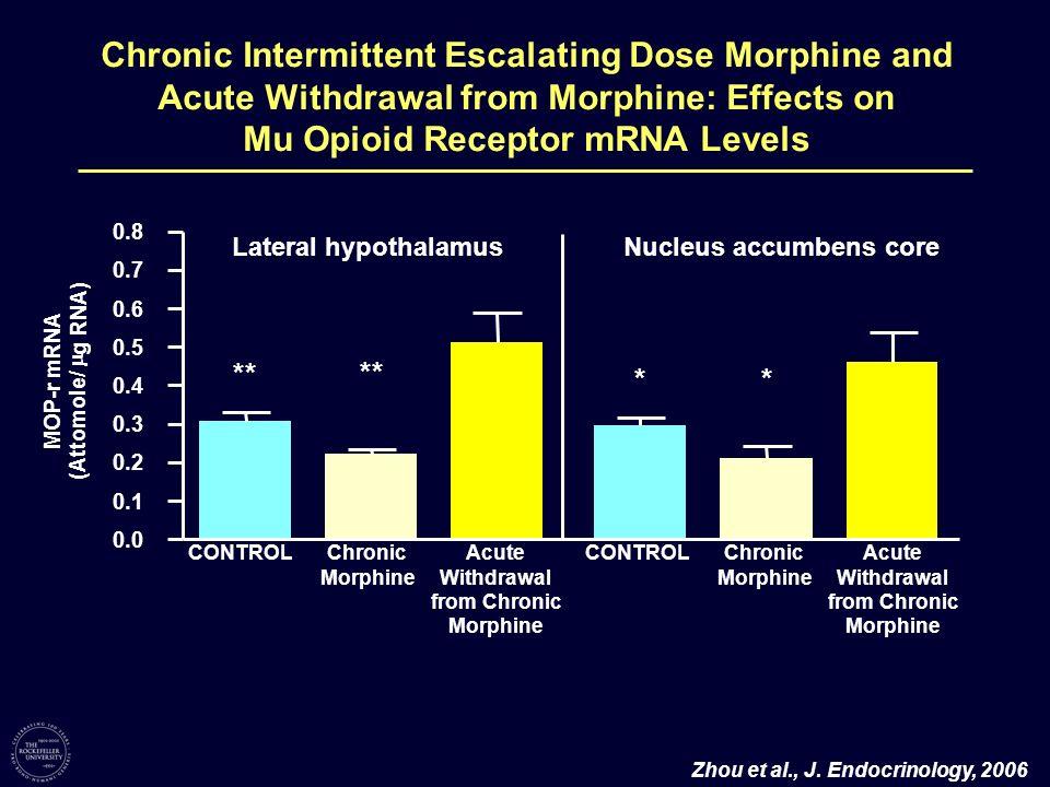 Mu Opioid Receptor mRNA Levels Nucleus accumbens core