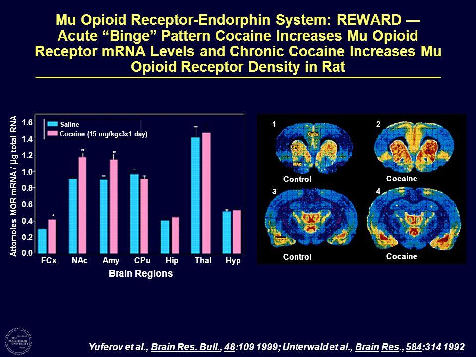 Mu Opioid Receptor-Endorphin System: REWARD — Acute Binge Pattern Cocaine Increases Mu Opioid Receptor mRNA Levels and Chronic Cocaine Increases Mu Opioid Receptor Density in Rat