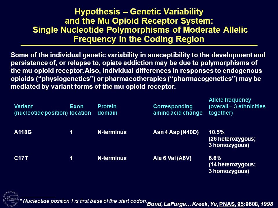Hypothesis – Genetic Variability and the Mu Opioid Receptor System: Single Nucleotide Polymorphisms of Moderate Allelic Frequency in the Coding Region