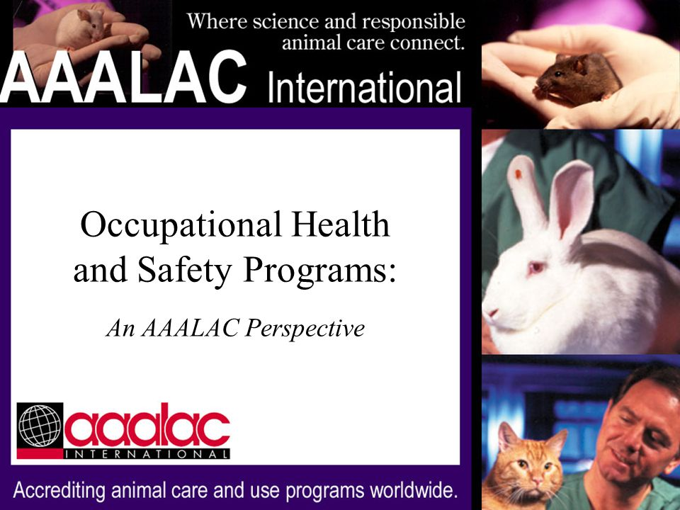 Occupational Health and Safety Programs: An AAALAC Perspective