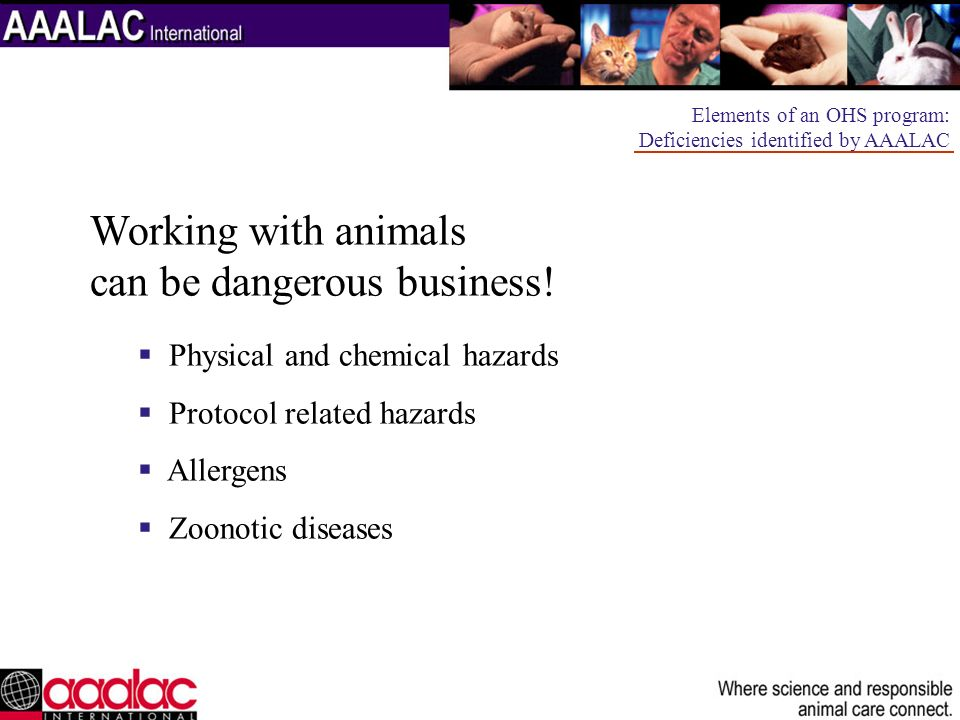 Working with animals can be dangerous business!