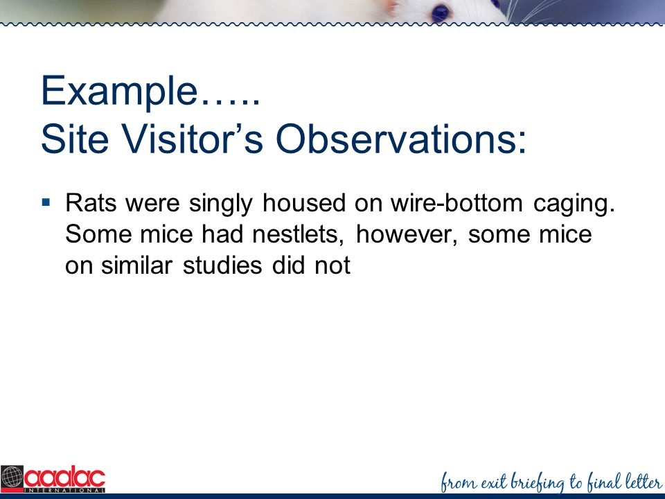 Example….. Site Visitor's Observations: