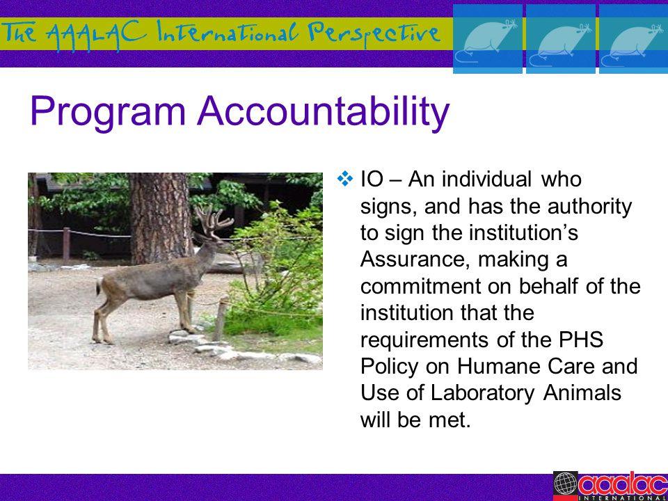 Program Accountability