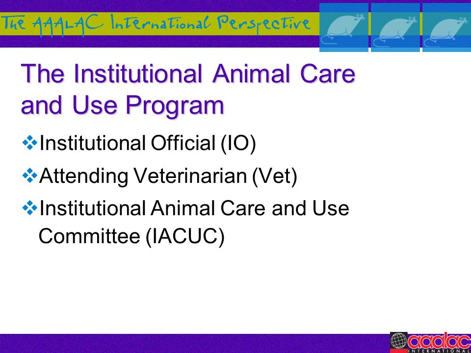 The Institutional Animal Care and Use Program