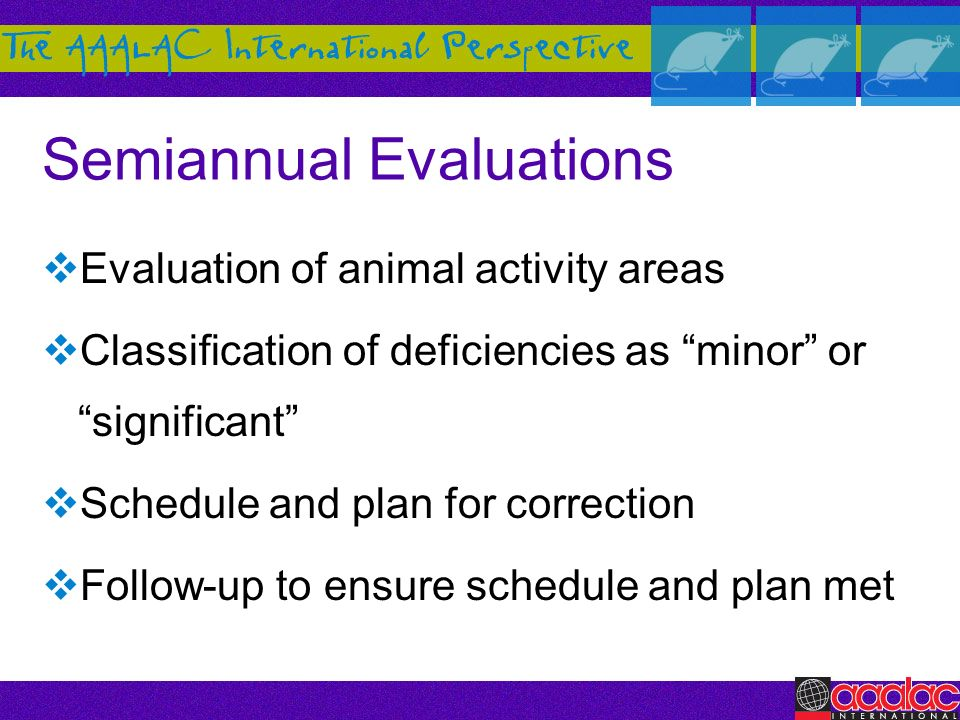 Semiannual Evaluations