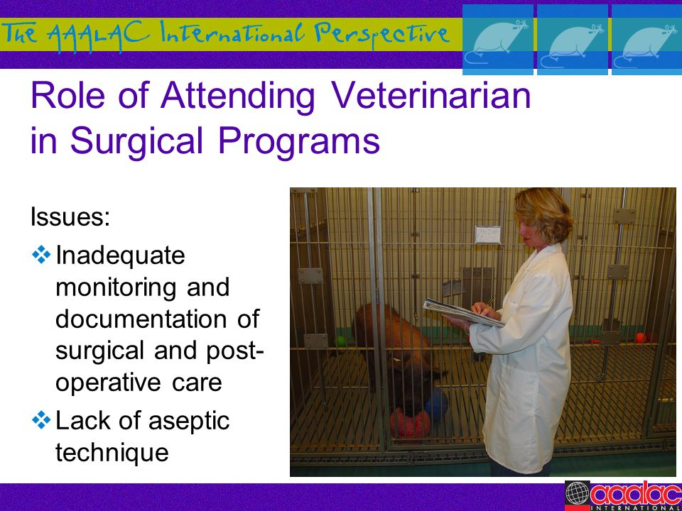 Role of Attending Veterinarian in Surgical Programs