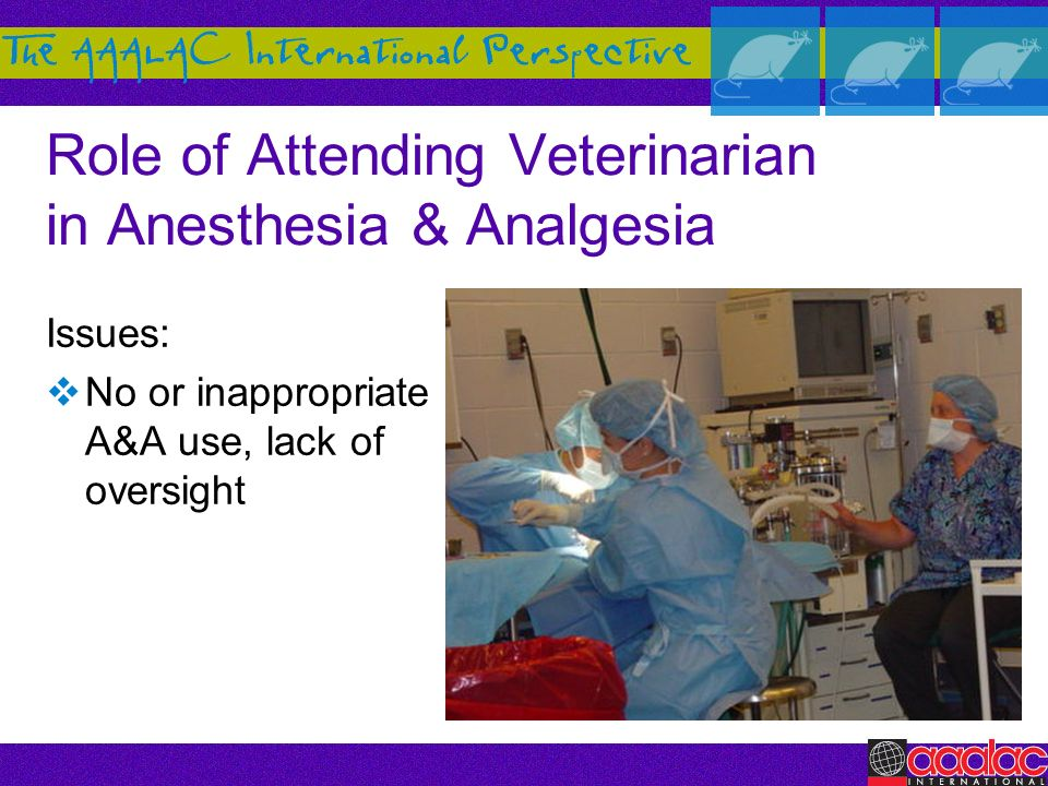 Role of Attending Veterinarian in Anesthesia & Analgesia