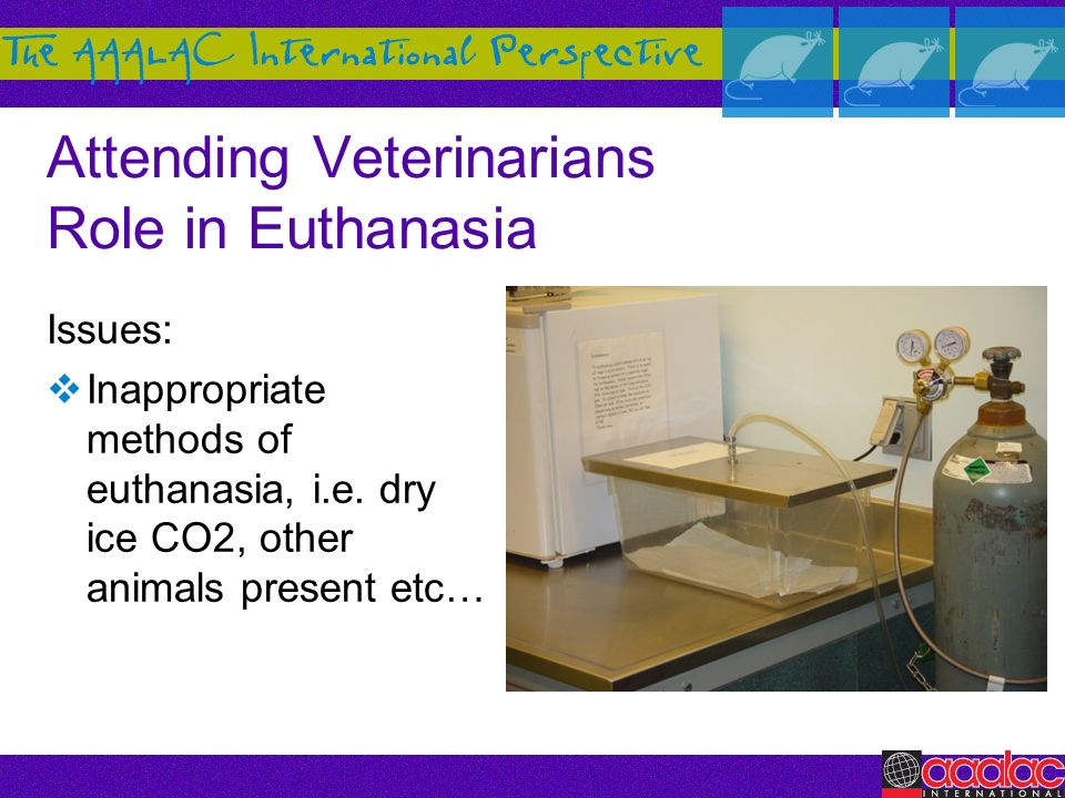 Attending Veterinarians Role in Euthanasia