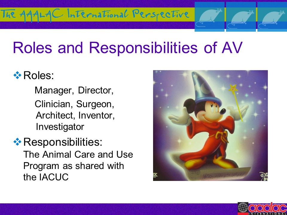 Roles and Responsibilities of AV