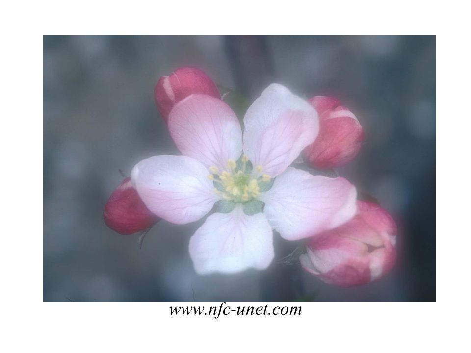 www.nfc-unet.com