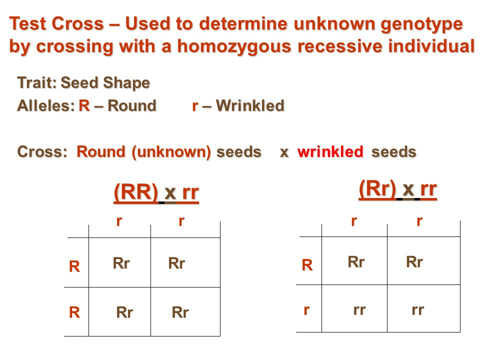 determining the unknown genotype of corn Determining the biochemical and molecular basis of host- plant resistance to  plant  ceptible corn genotypes was reduced when kernels were incubated at  100% relative humidity  11,16,20) is largely unknown our results yielded  some.