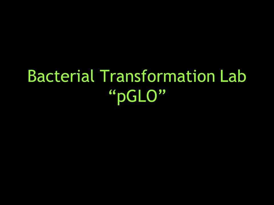 pglo lab Pglo transformation lab background information introduction to transformation in this lab you will perform a procedure known as a genetic transformation.
