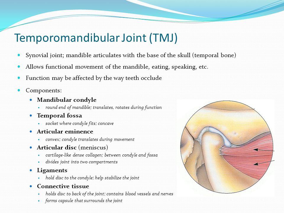 Luxury Anatomy Of Temporomandibular Joint Illustration Human