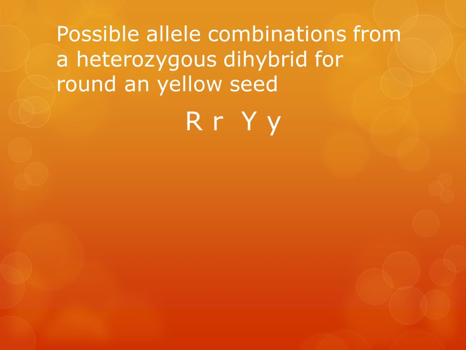 Possible allele combinations from a heterozygous dihybrid for round an yellow seed