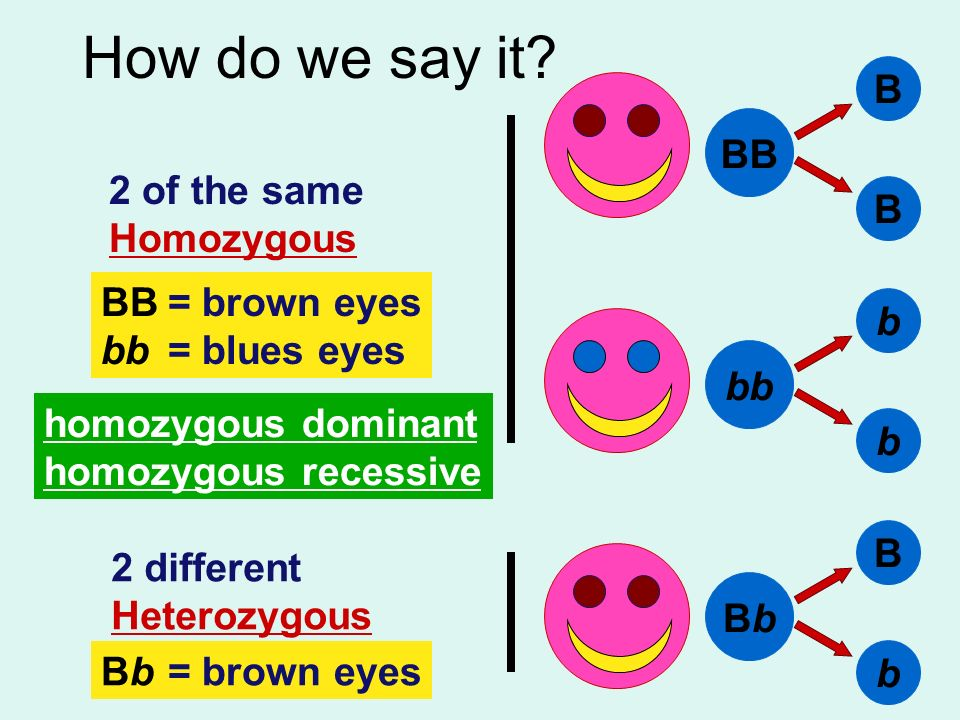 How do we say it B BB 2 of the same Homozygous BB = brown eyes b